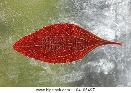 Red leaf on a dirty windowpane in the sun