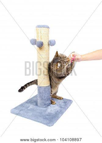 Cat Licks Woman's Finger