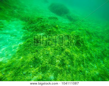 Green Seaweeds In A Sardinian Sea Floor