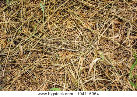 Dead Grass, Use For Background Or Texture