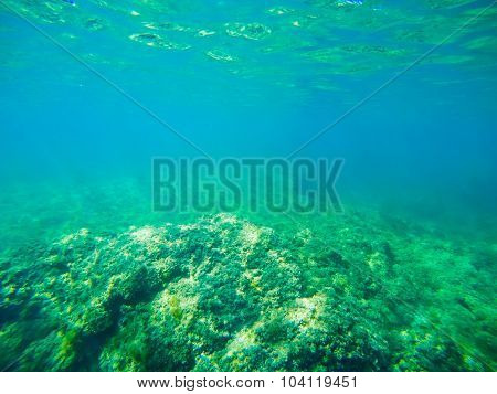 Green Sea Floor In Sardinia