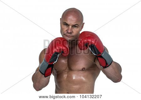 Portrait of bald boxer in red gloves against white background