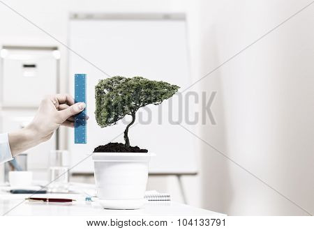 Close up of human hand measuring plant in pot with ruler