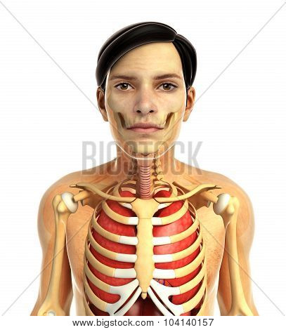 male skeletal anatomy