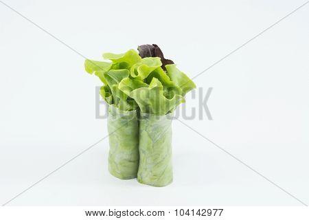RedOak- hydroponics vegetable isolate on white background