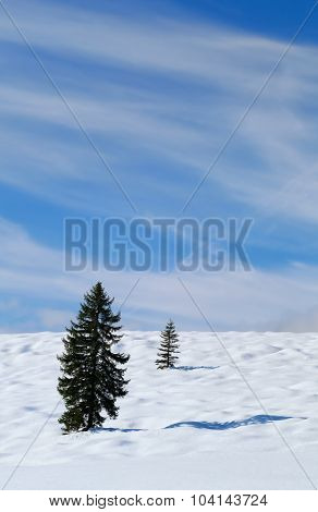 Spruce Trees On Snow Hill Over Blue Sky