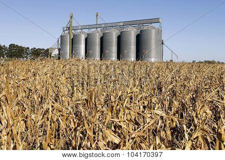 Silo grains