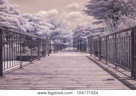 infrared photo Trees and grass in Public park bangkok thailand