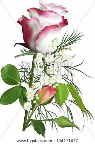 illustration with rose flower isolated on white background