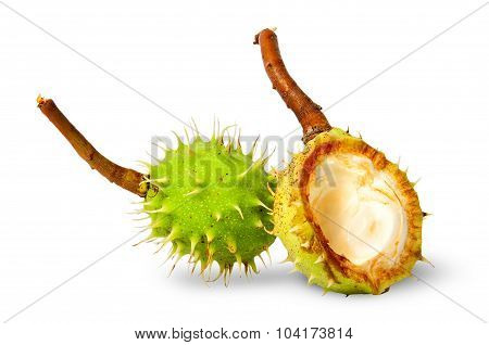 Chestnut Wholly And Peel Chestnuts
