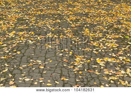 fallen leaves on the asphalt