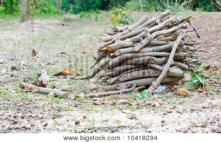 Firewood In Rural