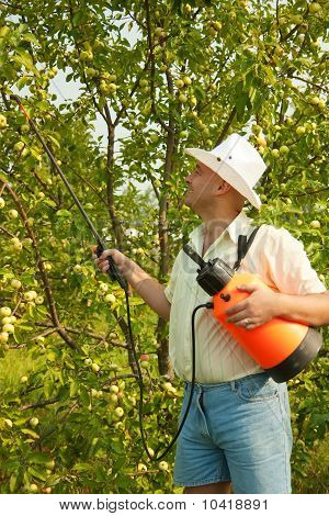 Male Spraying Tree Branches