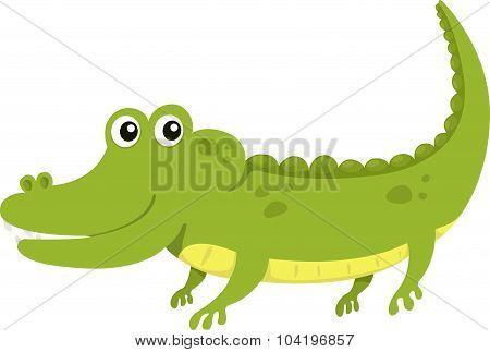 Illustrator of alligator
