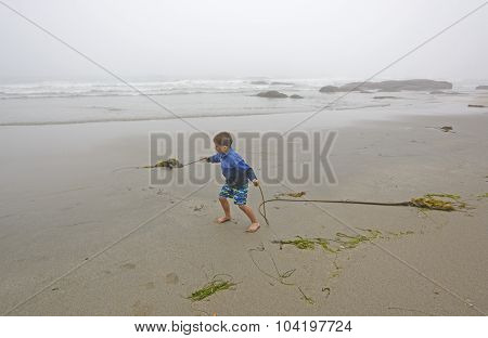 Young Boy Playing with Kelp on the Beach in the Fog