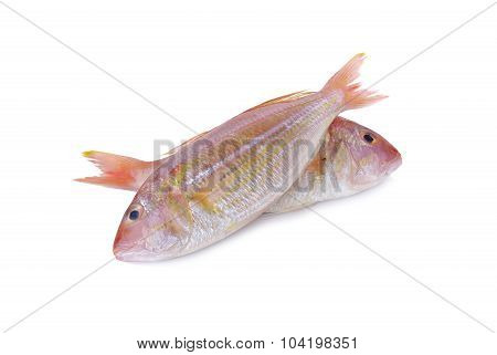 Sharptooth Snapper, Japanese Threadfin Bream On White Background