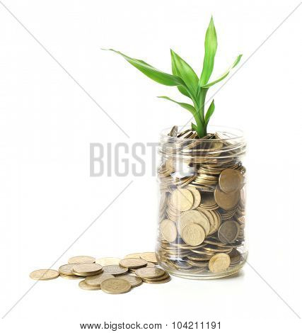 Plant growing in coins isolated on white