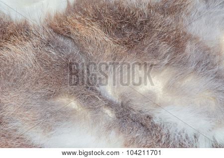 Animal Fur Texture Gray