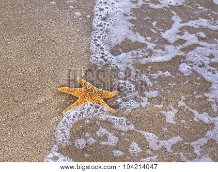 Sea Star On Wet Sandy Beach