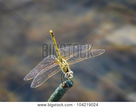 Dragonfly.