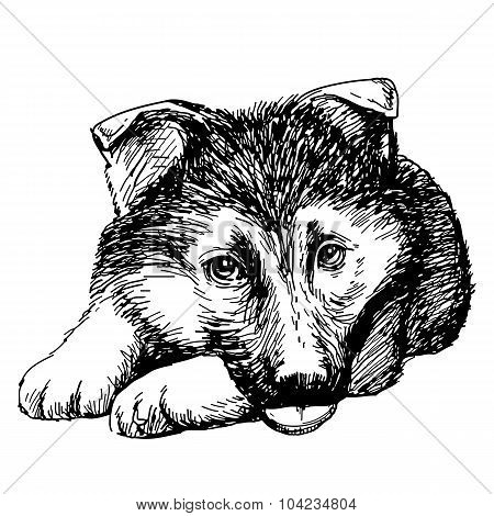 Puppy German Shepherd Hand Drawn