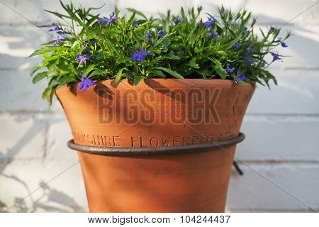 Terracotta wall pot with blue flowers