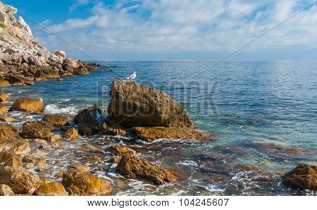 Black sea shore at spring season