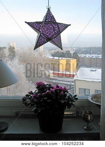Purple advent star and azalea