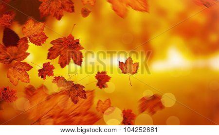 Autumn leaves against park