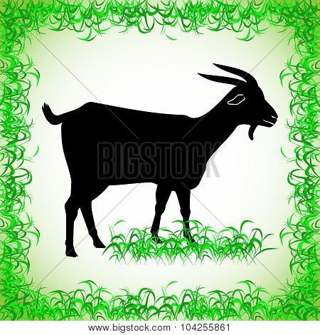 goat. realistic image of the contour object