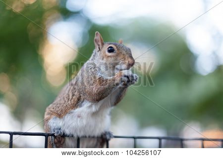 red squirrel sitting on top of fence
