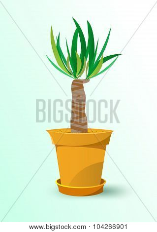 houseplant - yucca plant in a pot