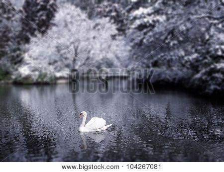 Beautiful Swan Lake Japan Winter Scene Concept