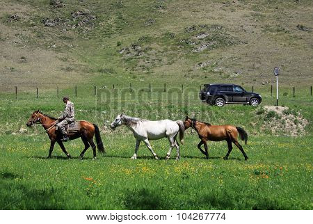 Altai, Russia - June 10, 2012: Tree Horses With A Horseman On One Of The Horses As Opposed To A Big