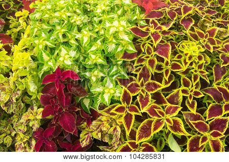 Fall Colored Plants