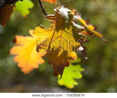 Yellow leaf on dark greed background. Shallow DOF. Focus on yellow leaf.