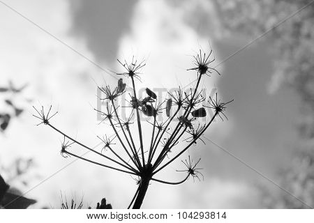 Low-Angle View of Flower Seed Head
