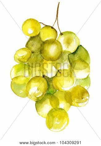 A watercolour drawing of a bunch of bright green grapes on white background