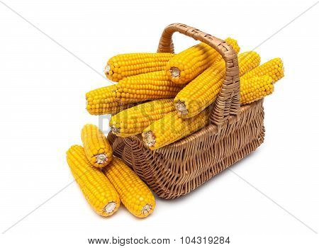 Mature Ears Of Corn In A Basket On A White Background