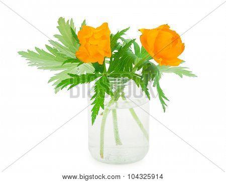 Globe-flowers in glass jar