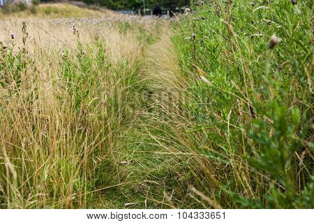 Path Through The Grass
