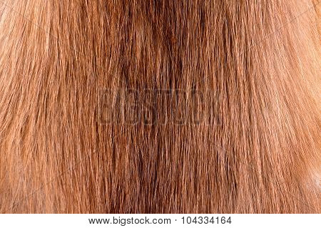 Real Weasel Fur Texture Or Background