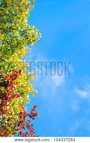 Autumn Bright Tree Leaves On The Branches On The Background Of Blue Sky