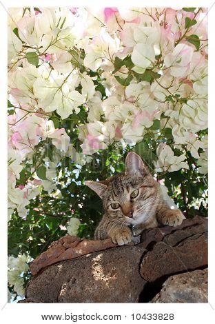 Bella Kitty