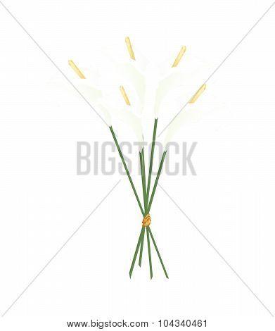 Beautiful White Anthurium Bouquet Or Flamingo Bouquet