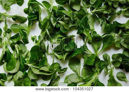 Green Fresh Leaves Watercress Salad On White Paper