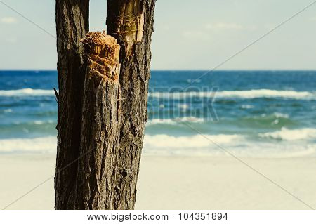 Trunk Of The Tree On A Background Of Blue Sea