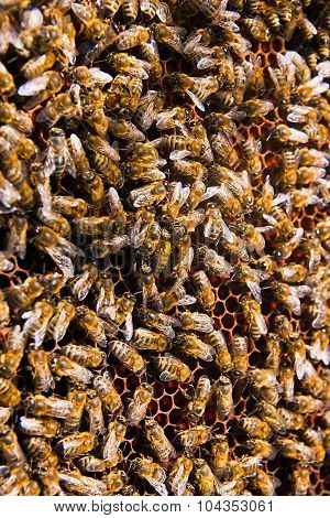 Close Up View Of The Bees Swarming On A Honeycomb.