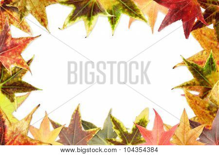 border of colorful autumnal leaves