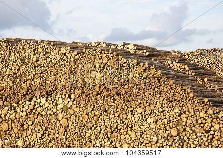 Huge Stack Of Logs Against Cloudy Sky At Lumber Yard